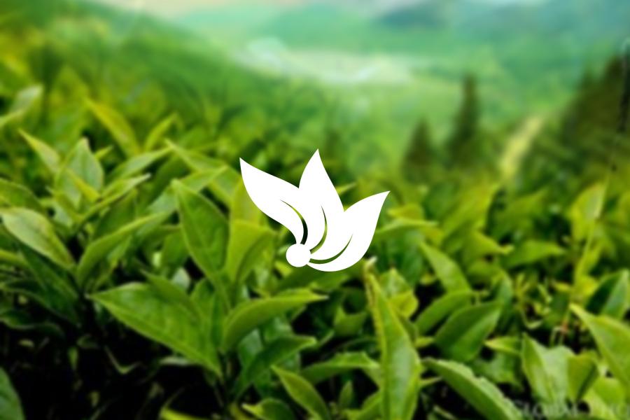 Thiết kế logo Công ty trà VinateaJSC